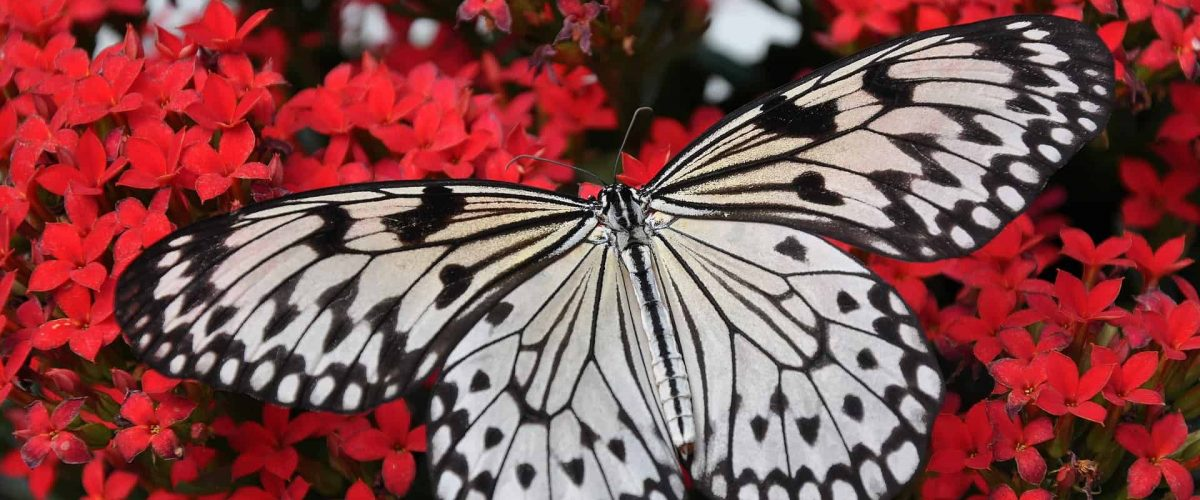 close-up-butterfly-flowers-1218884_1920